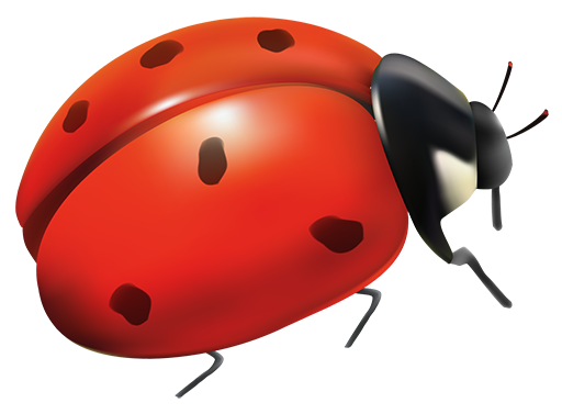 Image of a lady bug - a sign of good luck